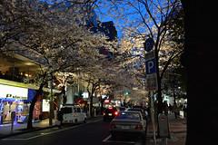 Yaesu (kimtosh11) Tags: flower japan tokyo nikon  sakura cherryblossoms   japanesecherry  d7100