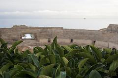 Amfiteatre de Tarraco (Lthien_) Tags: sea plant planta history mar ruins roman juegos games ruinas amphitheater historia tarragona runes gladiators anfiteatro jocs gladiadores tarraco rom costadaurada amfiteatre anfiteatroromano amfiteatrerom gladiadiors