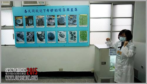 台灣綠藻18.jpg