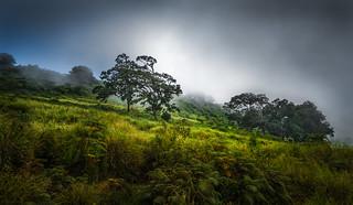 Steamy rainforest morning (Explored)