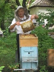 Beekeeper (Sasha India) Tags: ukraine bee honey miel ape abeja beehive miele abeille madu bal biene  lebah beekeeping ukraina apicultura ucrania beekeeper honig ar pszczoa  imker     arclk    apiculture ukrajna apiculteur mid    bienenzucht  apicultor ukrayna  arc pszczelarz pszczelarstwo     apicoltore                 pemeliharalebah