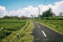 Rice field in Ubud (andrawayan) Tags: bali green landscape fujifilm ricefield balinese x100s