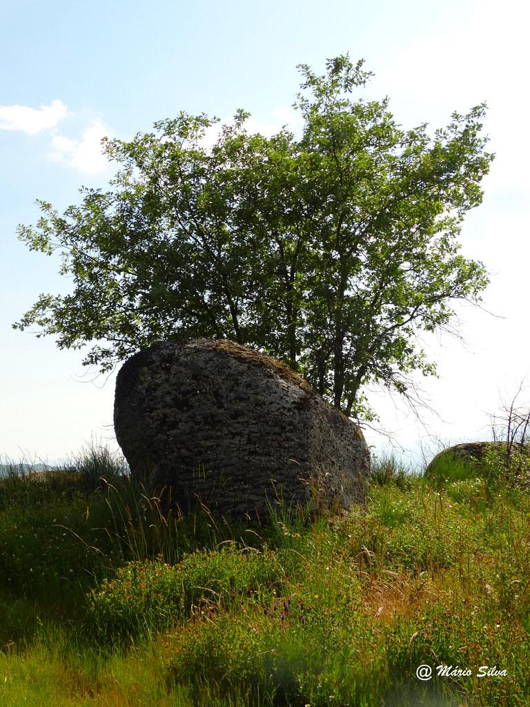 Águas Frias (Chaves) - ... a fraga e a árvore ...