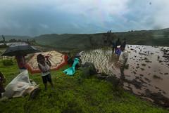 Hiking through Garbett Plateau, Maharashtra,India (E R) Tags: travel india lake clouds trekking paddy hiking farming farmland hills monsoon maharashtra cultivation westernghats sahyadri travelindia indiatravel incredibleindia stepfarming sahyadrihills deccanplateau paddyfarming maharashtratourism indianfarmers paddycultivation maharashtravillage maharashtrafarmers