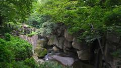 Rairaikyo Gorge, Akiu (Parmanand Sharma) Tags: sendai tohoku japan nature trees akiu