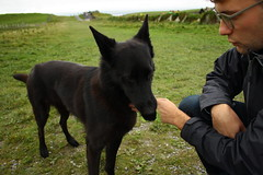 Cliffs of Moher (abbyef) Tags: cliffsofmoher countyclare ireland dog fetch
