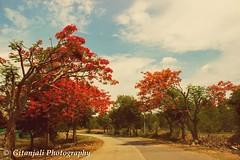 #Roadtrip #ooty (gitanjalisubramanian) Tags: roadtrip ooty