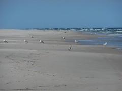 Mewy - Gaviotas -  (Azaharito) Tags: blue naturaleza nature water azul mar agua mare blu poland polska balticsea pomeranian azzurro polonia woda morze batyk morzebatyckie pomorze karwia marbaltico