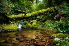 Cascades_1 (John A Hunt Photography) Tags: waterfall sony au australia nsw newsouthwales ebor comara visitnsw
