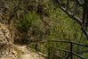 DSC03307 (Braulio Gómez) Tags: barrancadehuentitã¡n biodiversidad caminoamascuala canyon canyonhuentitan faunayflora floresyplantas guadalajara jalisco mountainrange méxico barrancadehuentitán naturaleza barranca paisaje huentitán senderismo ixtlahuacandelrío sierra guardianesdelabarranca