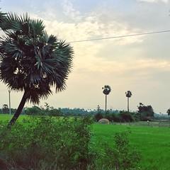 Landscape (redhot sathya) Tags: instagramapp square squareformat iphoneography uploaded:by=instagram skyline