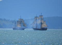 Cannon Fire (Neal D) Tags: squalicumharbour washington bellingham ship boat pirateship sails tallship ladywashington hawaiianchieftain