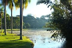 IMG_6814 (rafaeldeoliveira) Tags: curitiba paran brasil inverno winter geada freeze gelo parquebacacheri canon canoneosrebelt2i