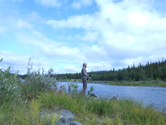 Fly Fishing (tleu) Tags: saxn vsterbotten sweden fly fishing trout bckring borgafjll