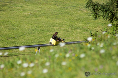 Hop On Hop Off (32 van 34) (MiGe Fotografie) Tags: hoponhopoff bled sloveni bus gezin vakantie 2016 rodelen