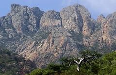 Sconosciute (lincerosso) Tags: socotra isoladisocotra socotraisland yemen oceanoindiano montagne mountains paesaggio landscape luce bellezza armonia mistero