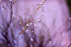 Flores de Invierno (Linx Photography) Tags: flores flor flower flowers invierno winter bokeh macro nikkor flickrunitedwinner
