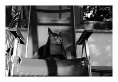 mos outlook on life (rainbowcave) Tags: cat tomcat sun shadow chair throne katze kater liegestuhl sonne schatten