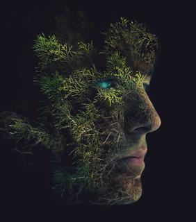 Tree Me Final