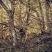Träd detaljer