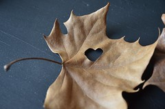 Heart in Leaf.