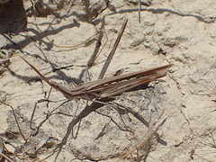 Unknown insect (P5056724 TG-3 5.5mm iso100 f9 1_320s) (Mel Stephens) Tags: holiday animal animals insect bay wildlife cyprus olympus stylus gps tough 2015 q2 pissouri tg3 201505 20150505