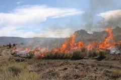 whiskey hill fire break