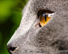 Sauron's eye (in fact, Neko's eye) (Max Sat) Tags: cat chat eye macro maxsat maxwellsaturnin neko oeil unexplored
