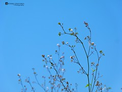Tiny wild flowers