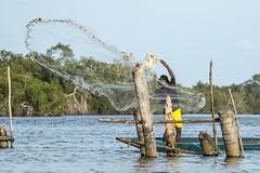 Pche  l'pervier (sidcamelot) Tags: lagune nature eau action cte paysage pcheur ctedivoire afrique ivorycoast divoire epervier assinie fabuleuse