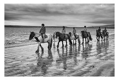 The Magnificent Seven (dunne_s) Tags: second mono beach horses sea kerry ireland explore