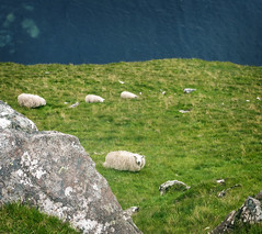 sheeps at neist point, isle of skye (violica) Tags: unitedkingdom regnounito scotland scozia highlands skye isleofskye neistpoint ebridi hebrides pecore sheeps scogliere cliffs