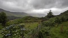 Irish countryside (g.laflammephoto) Tags: ireland rainy beautiful nature landscape outdoors ringofkerry flowers explore europe eurotrip travel travelling d750 nikon nikonphotography
