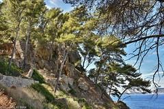 Le pays varois (F) (Annelise LE BIAN) Tags: arbres eau fleursetplantes france lamadrague méditerranée mer saintcyrsurmer var provencealpescôtedazur explore