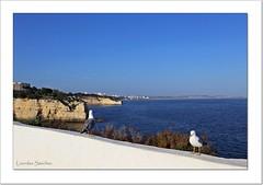 De cara a Levante y de cara a Poniente (Lourdes S.C.) Tags: costa portugal agua paisaje cielo gaviota costaatlntica elalgarve