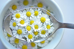 When someone told me I lived in a fantasy land ... I nearly fell of my Unicorn and Peter Pan burst out laughing. (natus.) Tags: daisy flower white fantasy macro httpwwwimagekindcomartistsdonatus food eat yellow