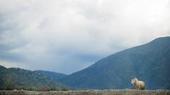 I (Jonhatan Photography) Tags: chile horses animals canon explorer