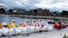 Southport, Lancashire, England, swan boats on lake (rossendale2016) Tags: hired wheels large tricycle bicycle floating pedals lancashire pedal lake ride boat swan england southport