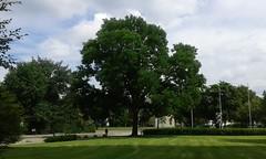 lunch break (martini_bianca) Tags: nrnberg norimberga nuremberg baum natur park himmel wiese prato parco estate sommer juli mittag anlage deutschland allemagne germany germania martinibianca