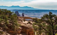 Scene From The Mesa Arch (Ron Drew) Tags: landscape nikon d800 utah moab canyonlandsnationalpark mesaarch lasalmountains rockymountains mountains canyon arch trees desert rockformation park southwest usa