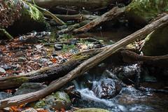 LaGomera2016 (yeray.ventura) Tags: bosque cedro paisaje naturaleza agua rio riachuelo corriente