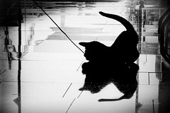 we play (Leo a Mia) Tags: play black white cat silhouette kitty