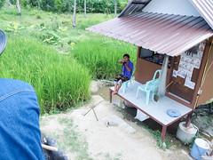20160929-P9290223 (j12oppa) Tags: elephanttracking pattaya thailand elephants 코끼리트랙킹 파타야 태국