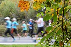 Hallwilerseelauf: 10 Kilometer Lauf