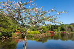 Toowoomba Japanese Gardens (jan_clewett) Tags: toowoomba japanese gardens spring 2016 beautiful