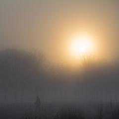 Uppsala, November 12, 2014 (Ulf Bodin) Tags: morning autumn sun mist man sol fog sweden walk uppsala sverige höst sunup soluppgång morgon dimma uppsalalän