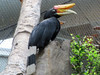 Hornbill (bookworm1225) Tags: zoo october minnesotazoo 2013 tropicstrail minnesotatrail