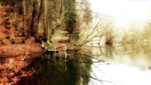Träumerischer Wald/Dreamy forest