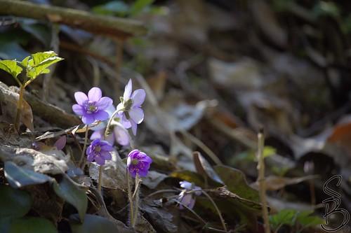 Flowers, Kärnten, Austria
