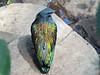 Bird (1) (bookworm1225) Tags: zoo march minnesotazoo 2015 tropicstrail minnesotatrail